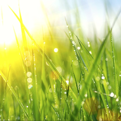 Systemische winter retraite 20 - 22 december 2021